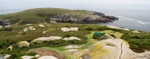 Montague Island Tour Afternoon