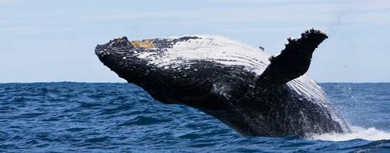 Narooma whale tour