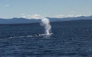 whale spray