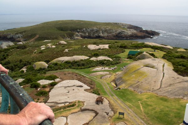 montague island view