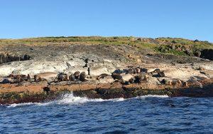 seals sun montague island