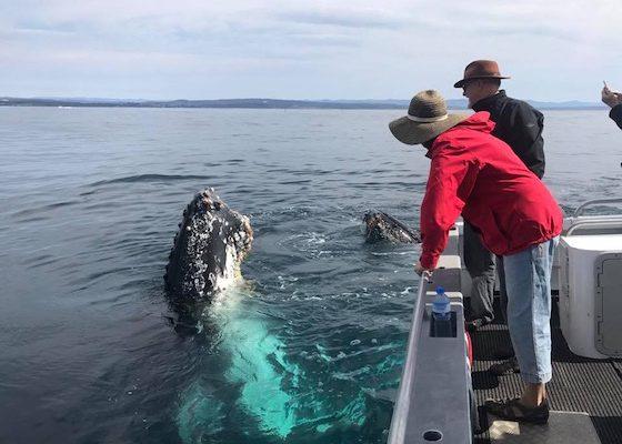 narooma whale watching season